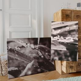 Bilder 2er-Set Dew