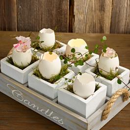 Eierschalen Abandoned Egg