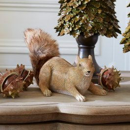 Eichhörnchen Eliot